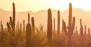 Cactus-in-Sun