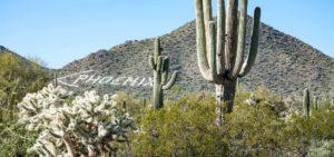Header-Phoenix-Cactus